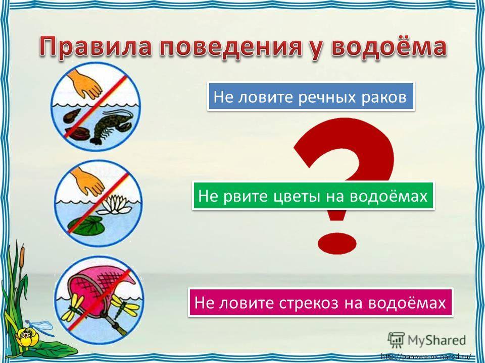 Не ловите речных раков Не рвите цветы на водоёмах Не ловите стрекоз на водоёмах