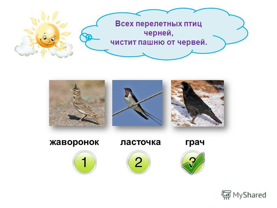 жаворонокграчласточка Всех перелетных птиц черней, чистит пашню от червей.