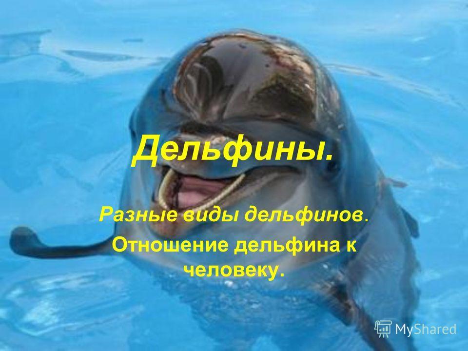Дельфины. Разные виды дельфинов. Отношение дельфина к человеку.