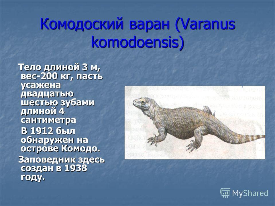 Комодоский варан (Varanus komodoensis) Тело длиной 3 м, вес-200 кг, пасть усажена двадцатью шестью зубами длиной 4 сантиметра Тело длиной 3 м, вес-200 кг, пасть усажена двадцатью шестью зубами длиной 4 сантиметра В 1912 был обнаружен на острове Комод