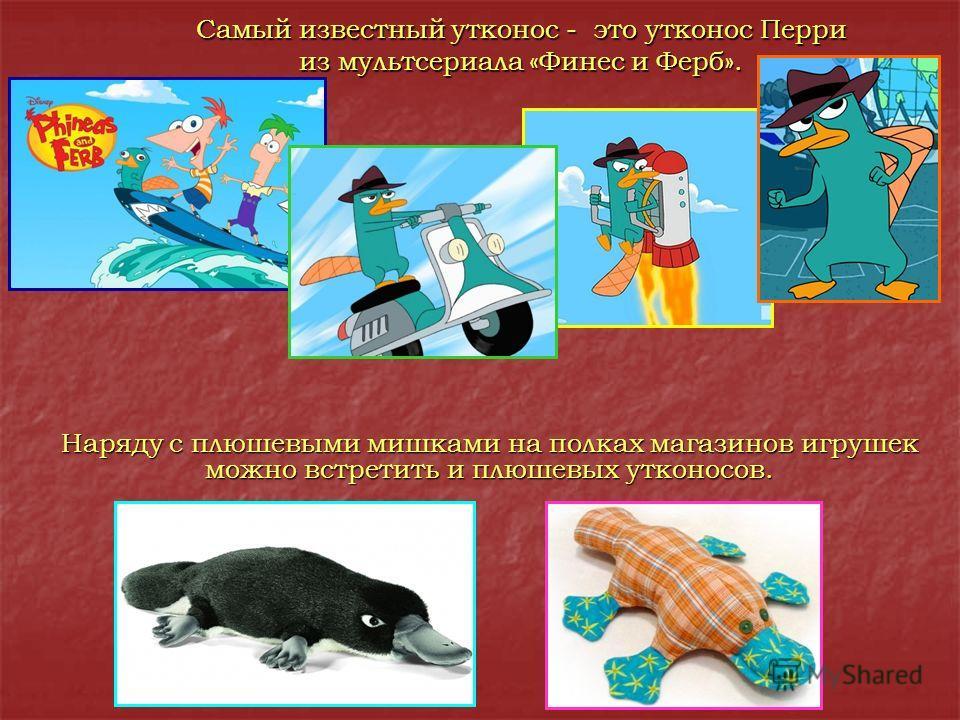 Самый известный утконос - это утконос Перри из мультсериала «Финес и Ферб». Наряду с плюшевыми мишками на полках магазинов игрушек можно встретить и плюшевых утконосов.