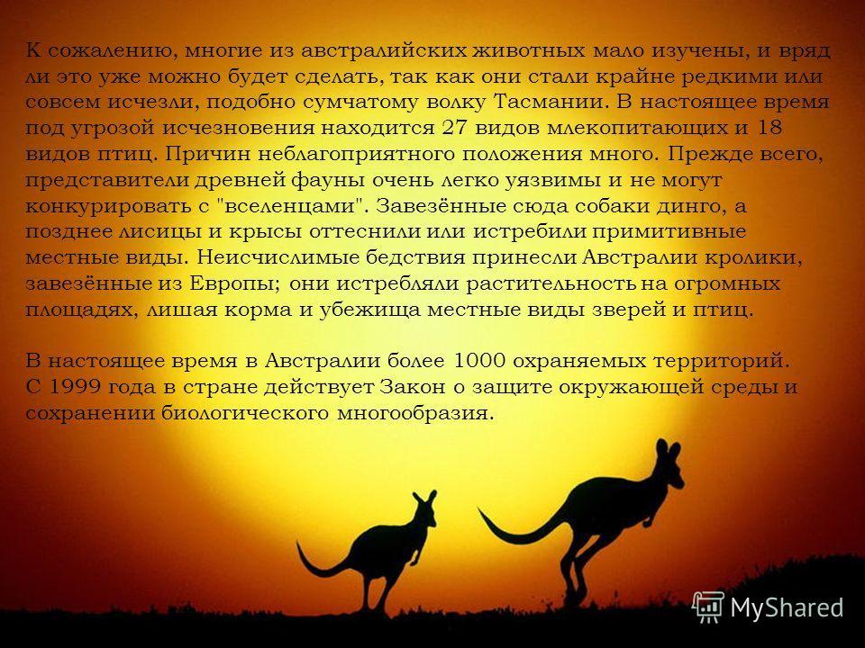 К сожалению, многие из австралийских животных мало изучены, и вряд ли это уже можно будет сделать, так как они стали крайне редкими или совсем исчезли, подобно сумчатому волку Тасмании. В настоящее время под угрозой исчезновения находится 27 видов мл
