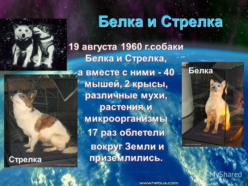 Белка и Стрелка 19 августа 1960 г.собаки Белка и Стрелка, а вместе с ними - 40 мышей, 2 крысы, различные мухи, растения и микроорганизмы 17 раз облетели вокруг Земли и приземлились. вокруг Земли и приземлились. Стрелка Белка