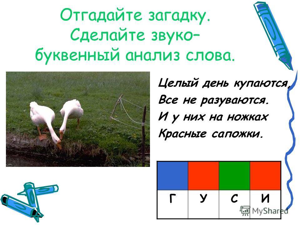 Отгадайте загадку. Сделайте звуко– буквенный анализ слова. Целый день купаются, Все не разуваются. И у них на ножках Красные сапожки. ГУСИ