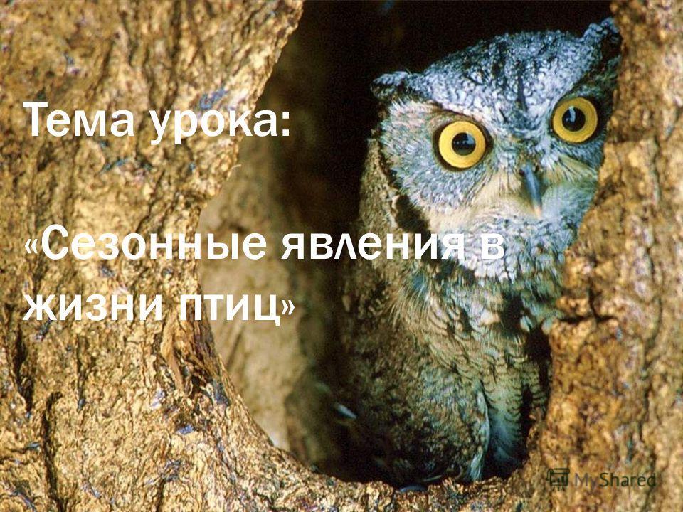 Тема урока: «Сезонные явления в жизни птиц»