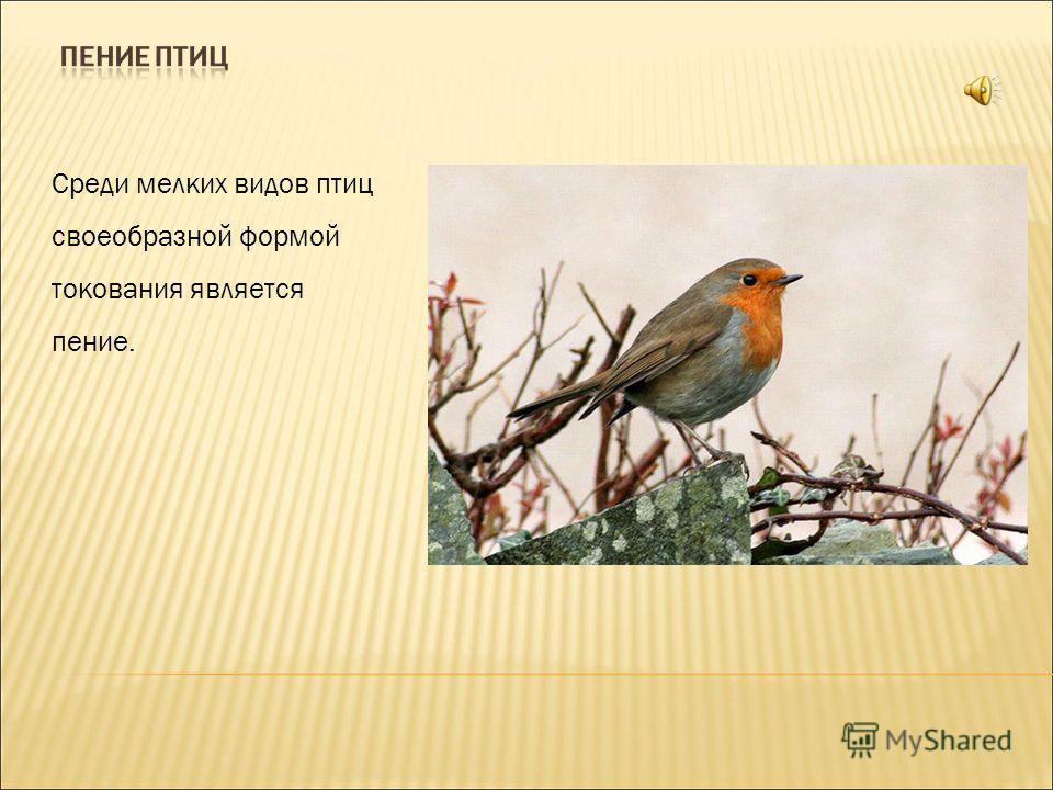 Среди мелких видов птиц своеобразной формой токования является пение.