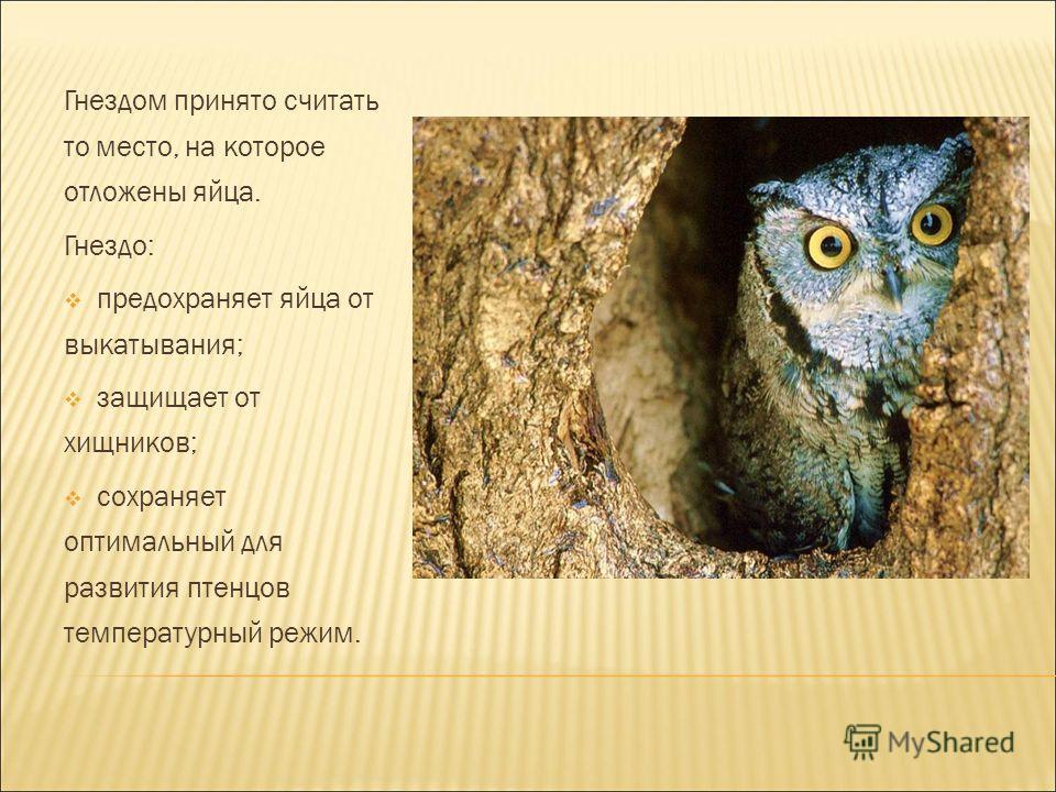 Гнездом принято считать то место, на которое отложены яйца. Гнездо: предохраняет яйца от выкатывания; защищает от хищников; сохраняет оптимальный для развития птенцов температурный режим.