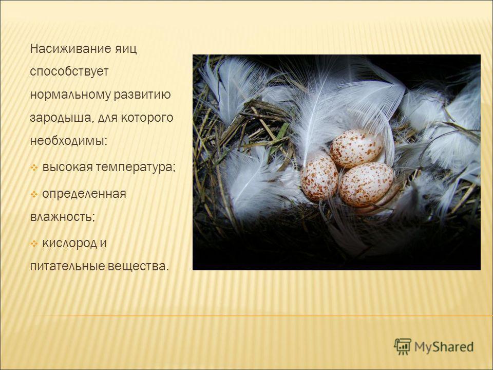 Насиживание яиц способствует нормальному развитию зародыша, для которого необходимы: высокая температура; определенная влажность; кислород и питательные вещества.