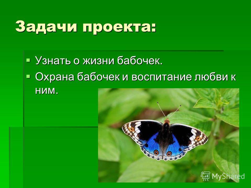Задачи проекта: Узнать о жизни бабочек. Узнать о жизни бабочек. Охрана бабочек и воспитание любви к ним. Охрана бабочек и воспитание любви к ним.