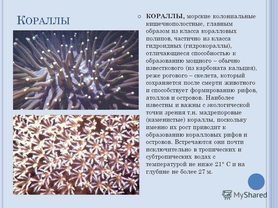 К ОРАЛЛЫ КОРАЛЛЫ, морские колониальные кишечнополостные, главным образом из класса коралловых полипов, частично из класса гидроидных (гидрокораллы), отличающиеся способностью к образованию мощного – обычно известкового (из карбоната кальция), реже ро