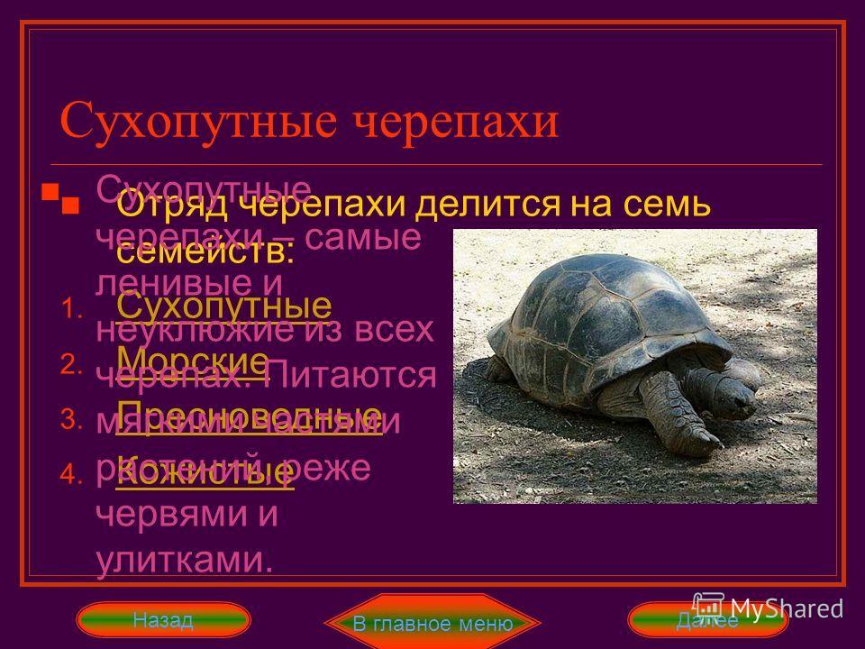 Отряд Черепахи Представителей этого отряда можно различить по панцирю, покрывающим почти всё тело. Он состоит из двух частей: спинного и брюшного щитков. Между щитками есть хрящевое соединение, которое у некоторых черепах окостеневает. Панцирь покрыт