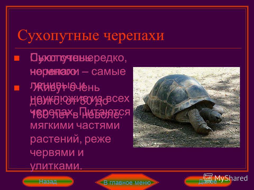 Сухопутные черепахи В главное меню ДалееНазад Отряд черепахи делится на семь семейств: 1. Сухопутные 5. Каймановые 2. Морские 6. Змеиношейные 3. Пресноводные 7. Большеголовые 4. Кожистые Сухопутные черепахи – самые ленивые и неуклюжие из всех черепах