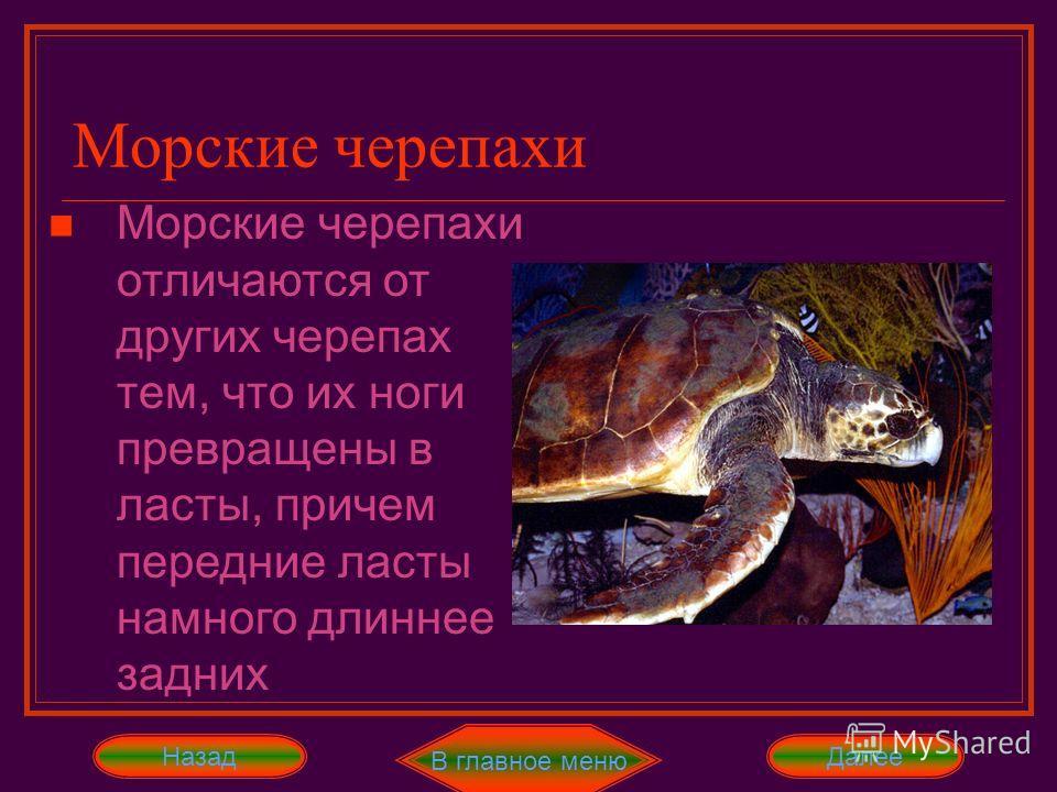 В главное меню ДалееНазад Сухопутные черепахи – самые ленивые и неуклюжие из всех черепах. Питаются мягкими частями растений, реже червями и улитками. Пьют очень редко, но много. Живут очень долго: от 50 до 160 лет в неволе. Сухопутные черепахи
