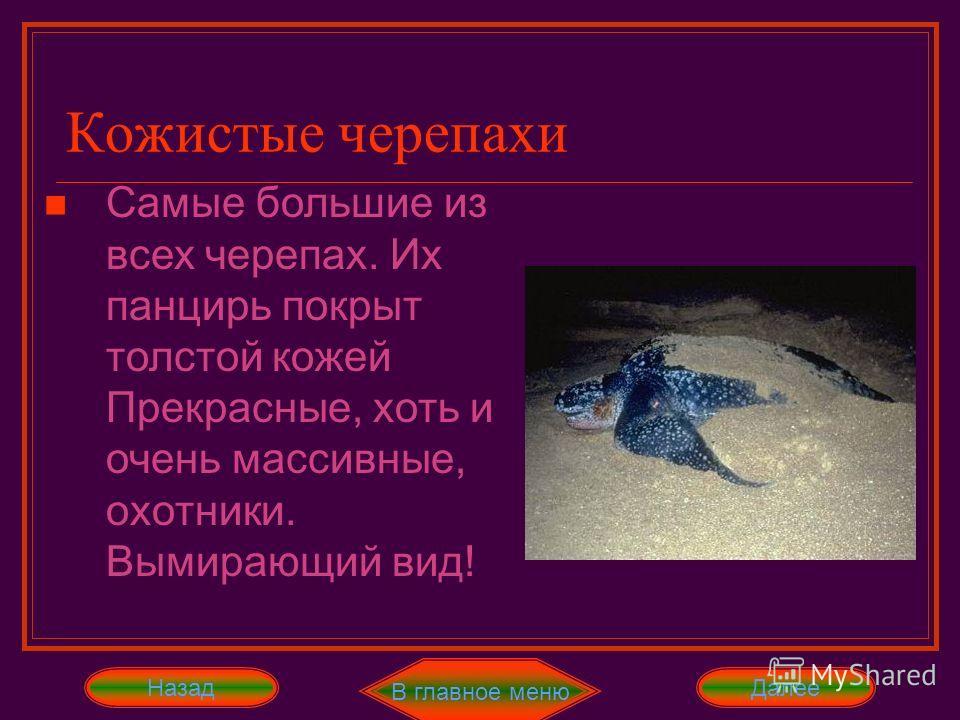 В главное меню ДалееНазад Морские черепахи отличаются от других черепах тем, что их ноги превращены в ласты, причем передние ласты намного длиннее задних Морские черепахи Бисса и зелёная суповая черепаха - самые распространённые представители этого с