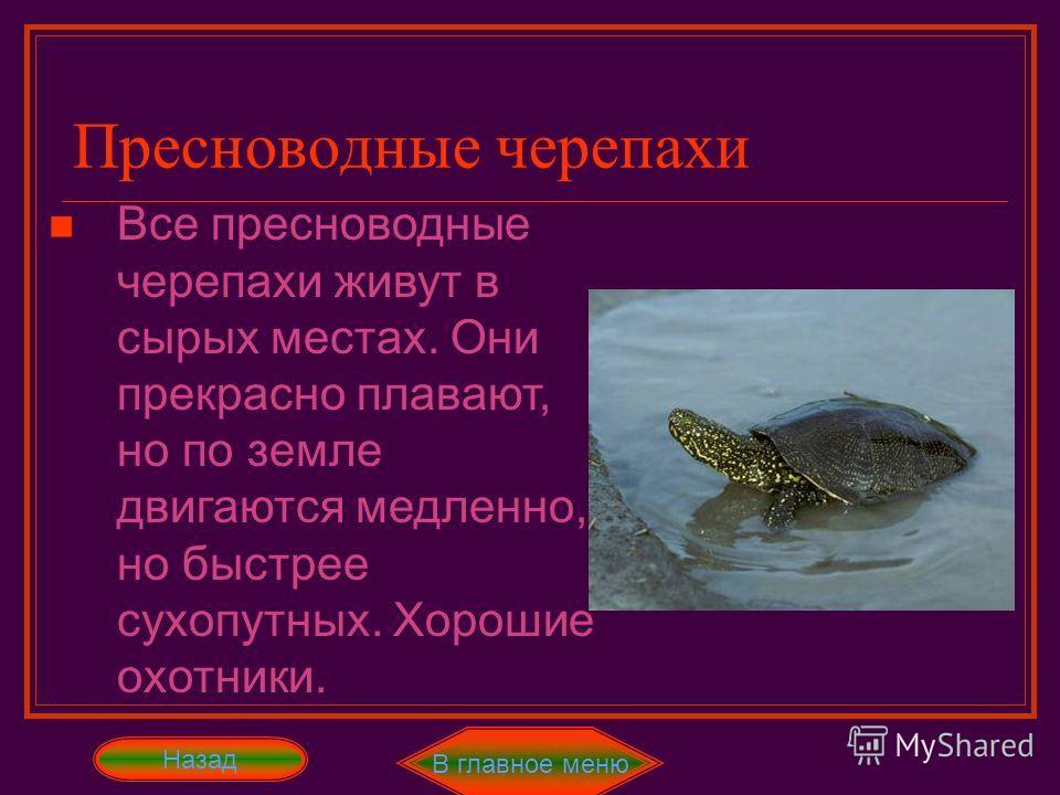 В главное меню Назад Самые большие из всех черепах. Их панцирь покрыт толстой кожей Прекрасные, хоть и очень массивные, охотники. Вымирающий вид! Кожистые черепахи Далее