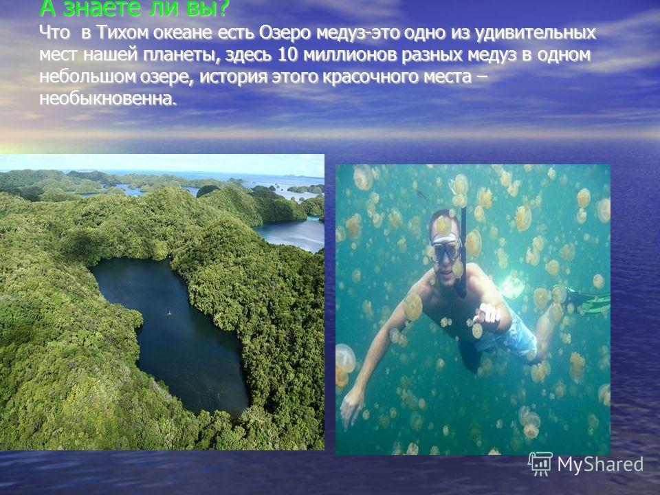 А знаете ли вы? Что в Тихом океане есть Озеро медуз-это одно из удивительных мест нашей планеты, здесь 10 миллионов разных медуз в одном небольшом озере, история этого красочного места – необыкновенна. А знаете ли вы? Что в Тихом океане есть Озеро ме