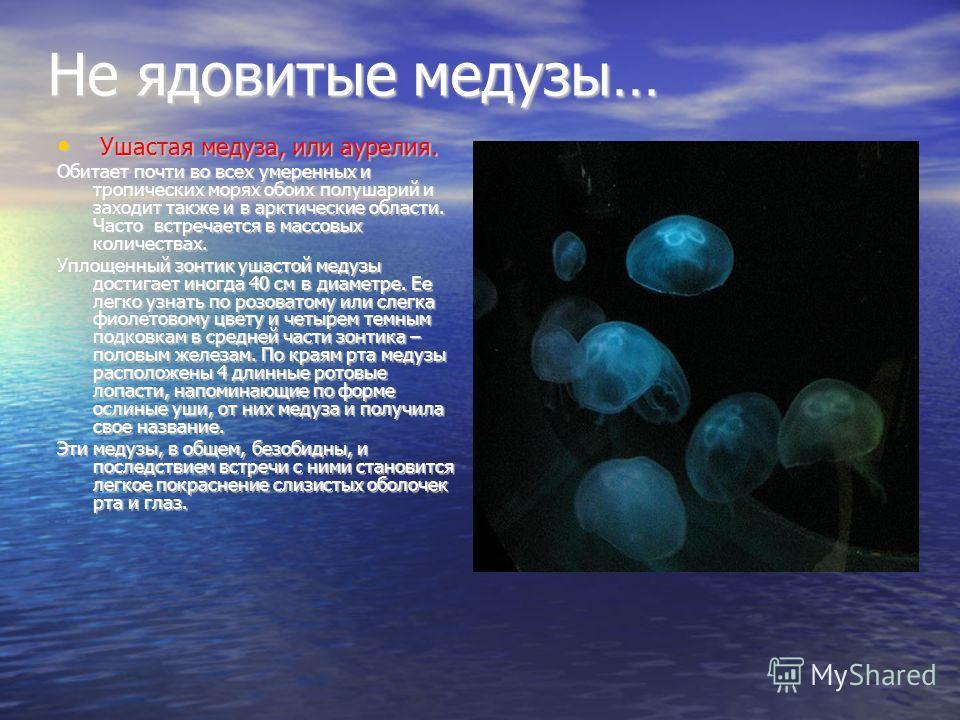 Не ядовитые медузы… Ушастая медуза, или аурелия. Ушастая медуза, или аурелия. Обитает почти во всех умеренных и тропических морях обоих полушарий и заходит также и в арктические области. Часто встречается в массовых количествах. Уплощенный зонтик уша