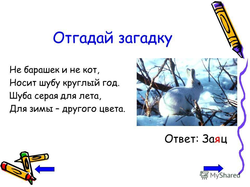 Отгадай загадку Не барашек и не кот, Носит шубу круглый год. Шуба серая для лета, Для зимы – другого цвета. Ответ: Заяц