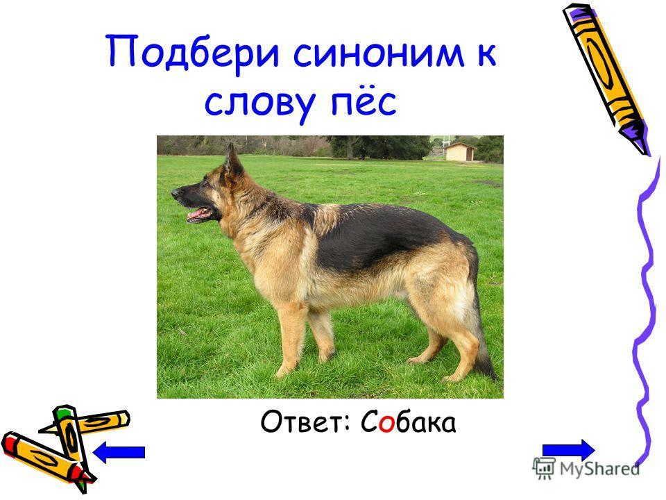 Подбери синоним к слову пёс Ответ: Собака