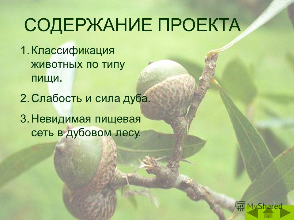 СОДЕРЖАНИЕ ПРОЕКТА 1.Классификация животных по типу пищи. 2.Слабость и сила дуба. 3.Невидимая пищевая сеть в дубовом лесу.
