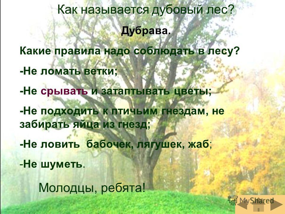 Как называется дубовый лес? Дубрава. Какие правила надо соблюдать в лесу? -Не ломать ветки; -Не срывать и затаптывать цветы; -Не подходить к птичьим гнездам, не забирать яйца из гнезд; -Не ловить бабочек, лягушек, жаб; -Не шуметь. Молодцы, ребята!