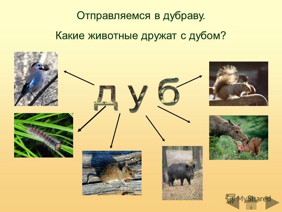 Отправляемся в дубраву. Какие животные дружат с дубом?