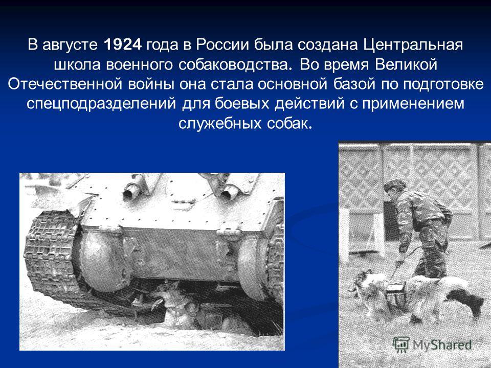 В августе 1924 года в России была создана Центральная школа военного собаководства. Во время Великой Отечественной войны она стала основной базой по подготовке спецподразделений для боевых действий с применением служебных собак.