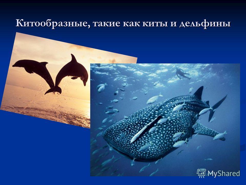 Китообразные, такие как киты и дельфины