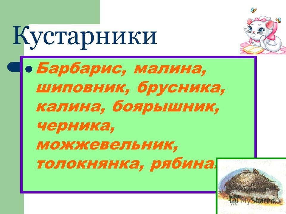 Кустарники Барбарис, малина, шиповник, брусника, калина, боярышник, черника, можжевельник, толокнянка, рябина.