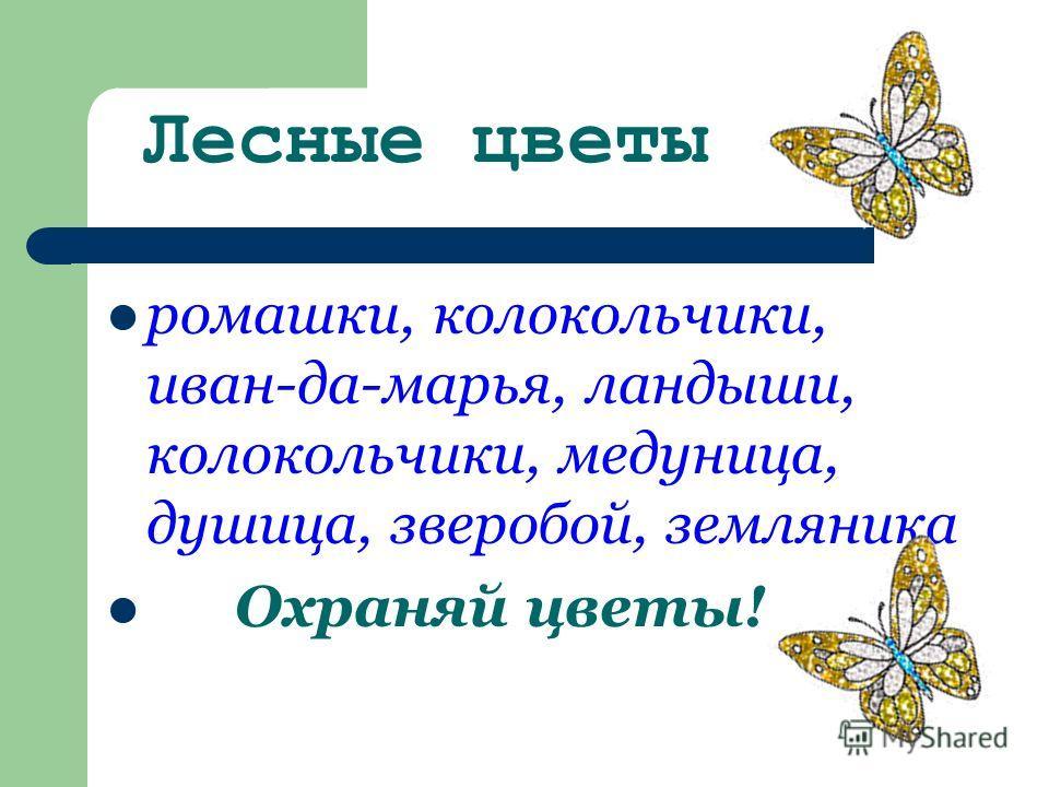 Лесные цветы ромашки, колокольчики, иван-да-марья, ландыши, колокольчики, медуница, душица, зверобой, земляника Охраняй цветы!