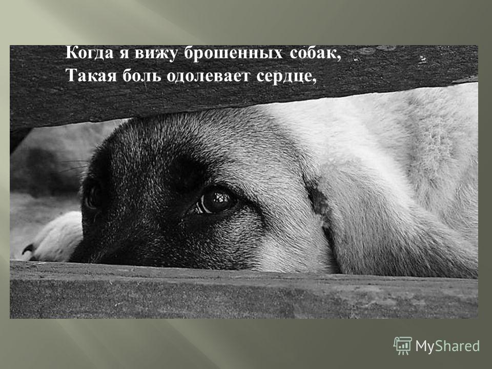 Когда я вижу брошенных собак, Такая боль одолевает сердце,