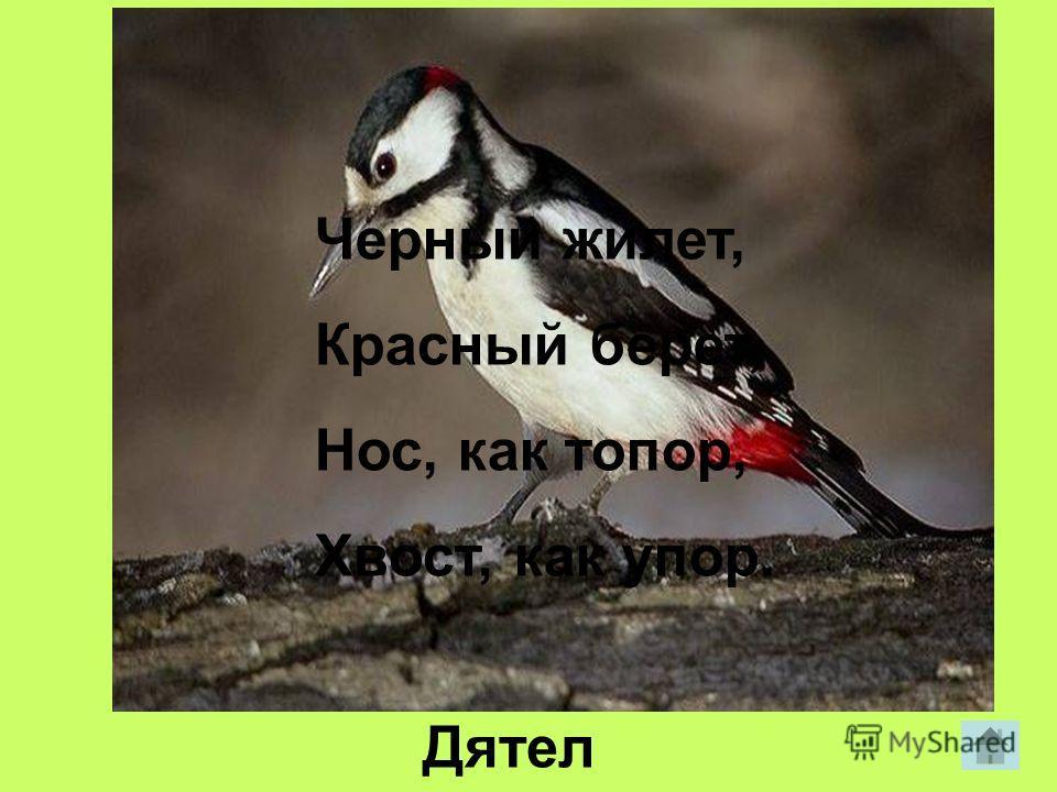Днем спит, Ночью летает, Прохожих пугает. сова