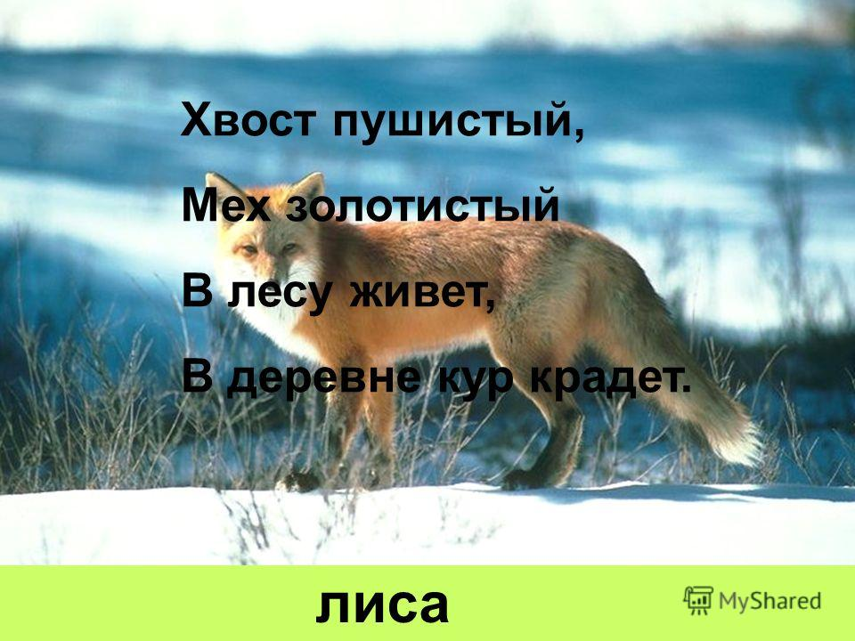 лось Горбоносый длинноногий Великан ветвистоногий. Ест траву, кустов побеги. С ним тягаться трудно в беге. Коль такого довелось Встретить, знай что это….