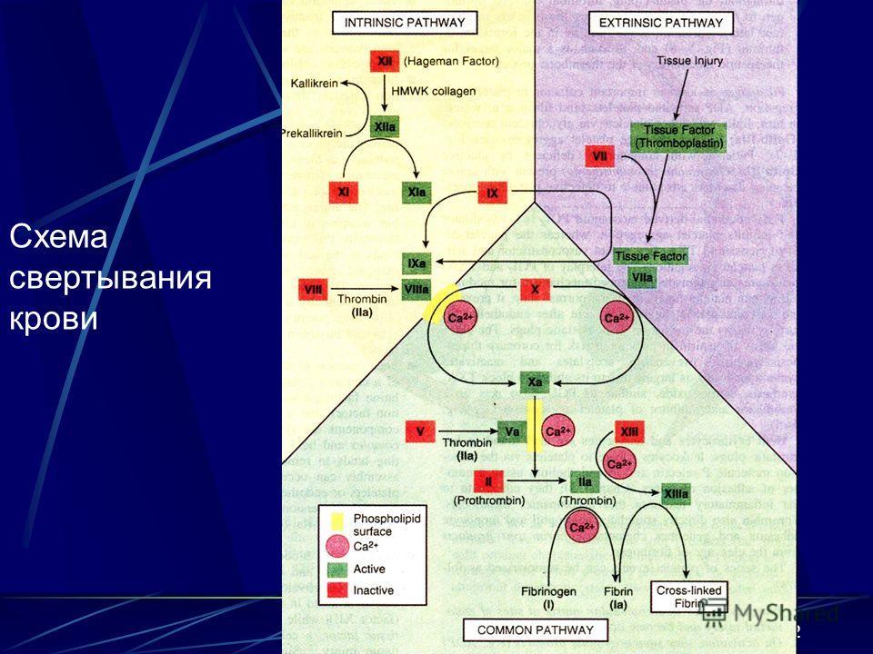 12 Схема свертывания крови