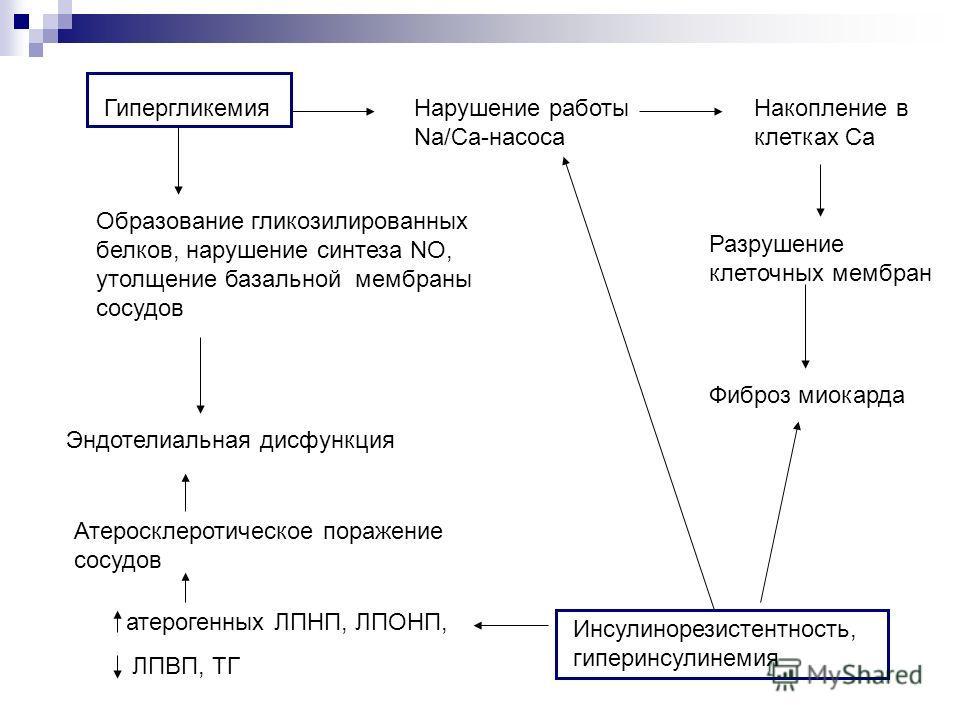ГипергликемияНарушение работы Na/Ca-насоса Накопление в клетках Ca Разрушение клеточных мембран Образование гликозилированных белков, нарушение синтеза NO, утолщение базальной мембраны сосудов Эндотелиальная дисфункция Инсулинорезистентность, гиперин
