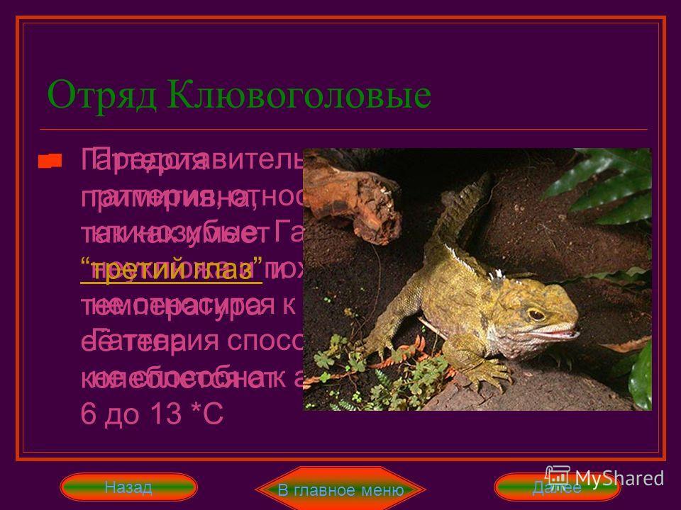 Отряд Клювоголовые Представитель этого отряда – только гаттерия, относящееся к семейству клинозубые. Гаттерия довольно неуклюжа и похожа на игуану, хотя и не относится к отряду чешуйчатые. Гаттерия способна к регенерации, но не способна к автотомии.