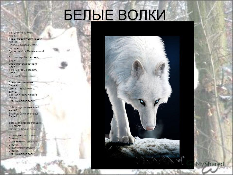 Презентацию на тему волки