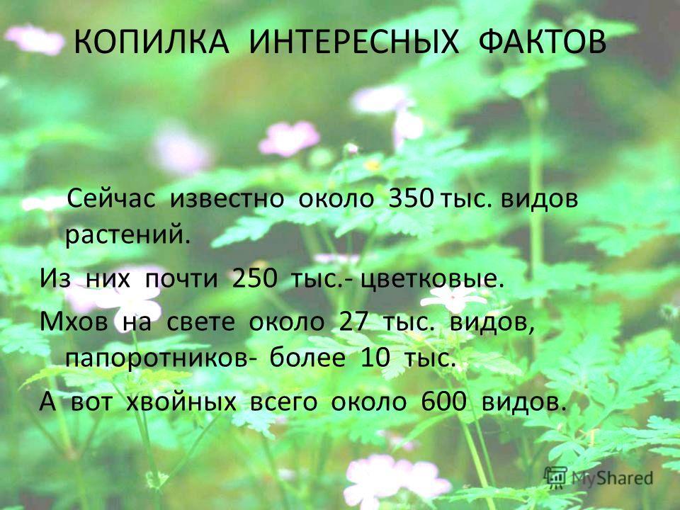 КОПИЛКА ИНТЕРЕСНЫХ ФАКТОВ Сейчас известно около 350 тыс. видов растений. Из них почти 250 тыс.- цветковые. Мхов на свете около 27 тыс. видов, папоротников- более 10 тыс. А вот хвойных всего около 600 видов.