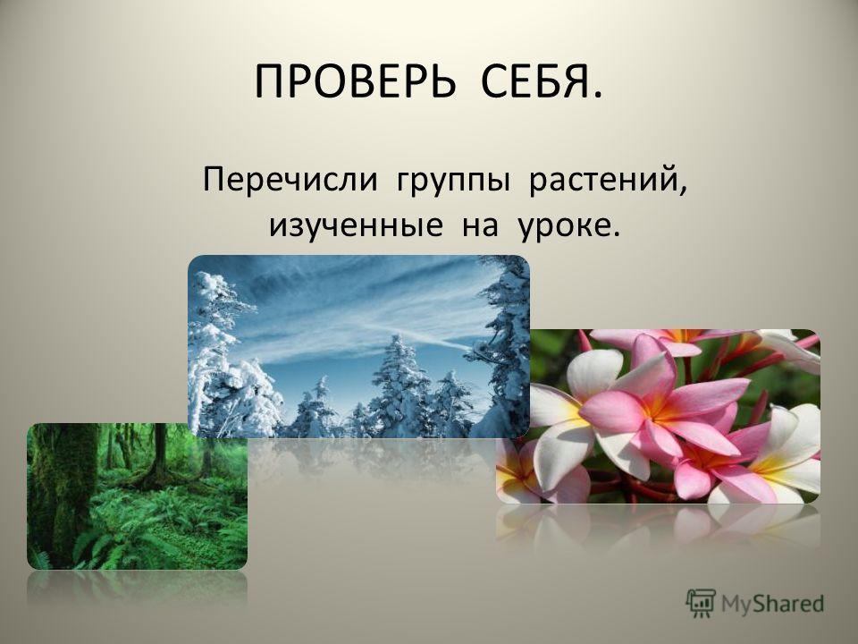 ПРОВЕРЬ СЕБЯ. Перечисли группы растений, изученные на уроке.