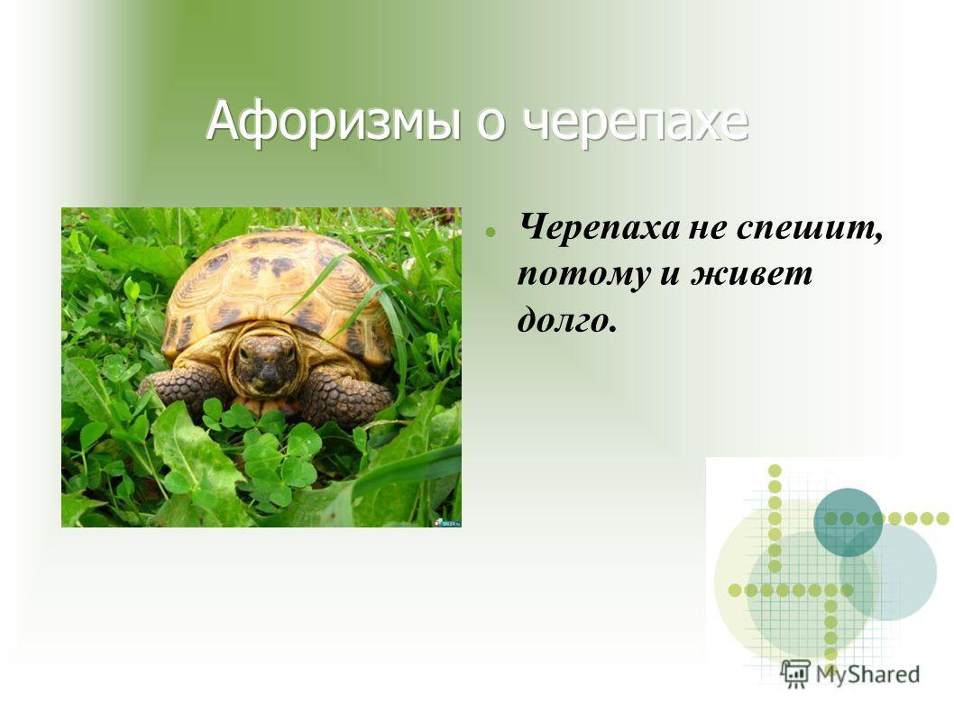 Черепаха не спешит, потому и живет долго.