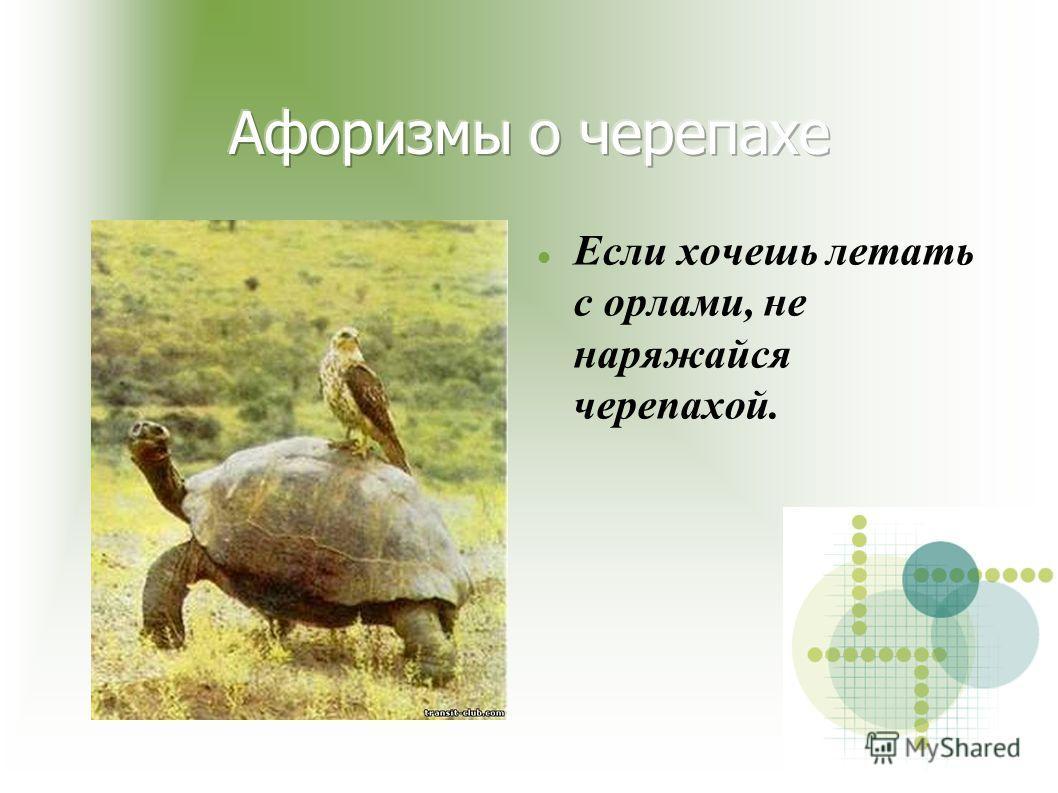 Если хочешь летать с орлами, не наряжайся черепахой.