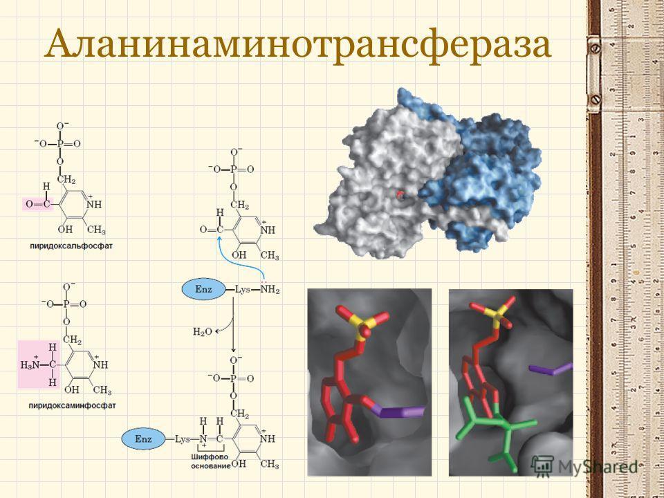 Аланинаминотрансфераза
