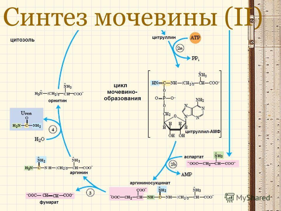 Синтез мочевины (ІІ)