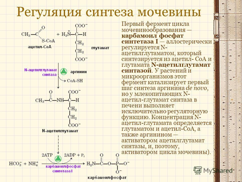 Регуляция синтеза мочевины Первый фермент цикла мочевинообразования карбамоил фосфат синтетаза І аллостерически регулируется N- ацетилглутаматом, который синтезируется из ацетил- CоA и глутамата N-ацетилглутамат синтазой. У растений и микроорганизмов