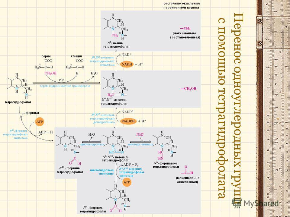 Перенос одноуглеродных групп с помощью тетрагидрофолата