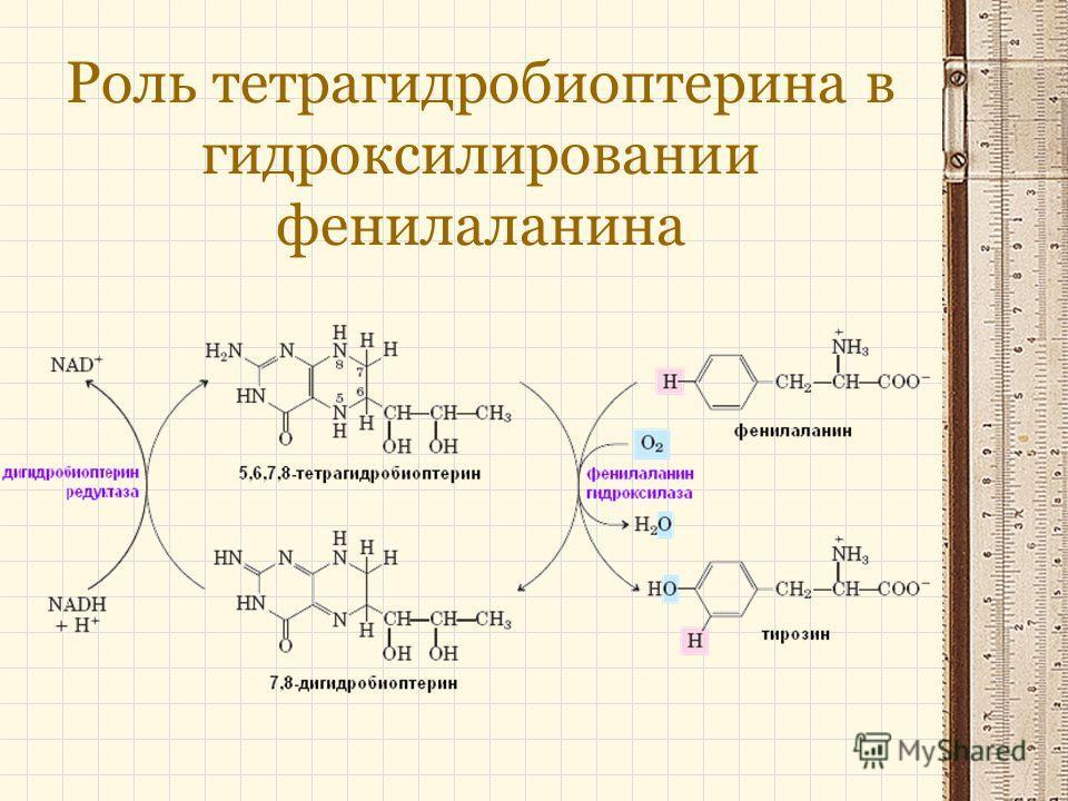 Роль тетрагидробиоптерина в гидроксилировании фенилаланина