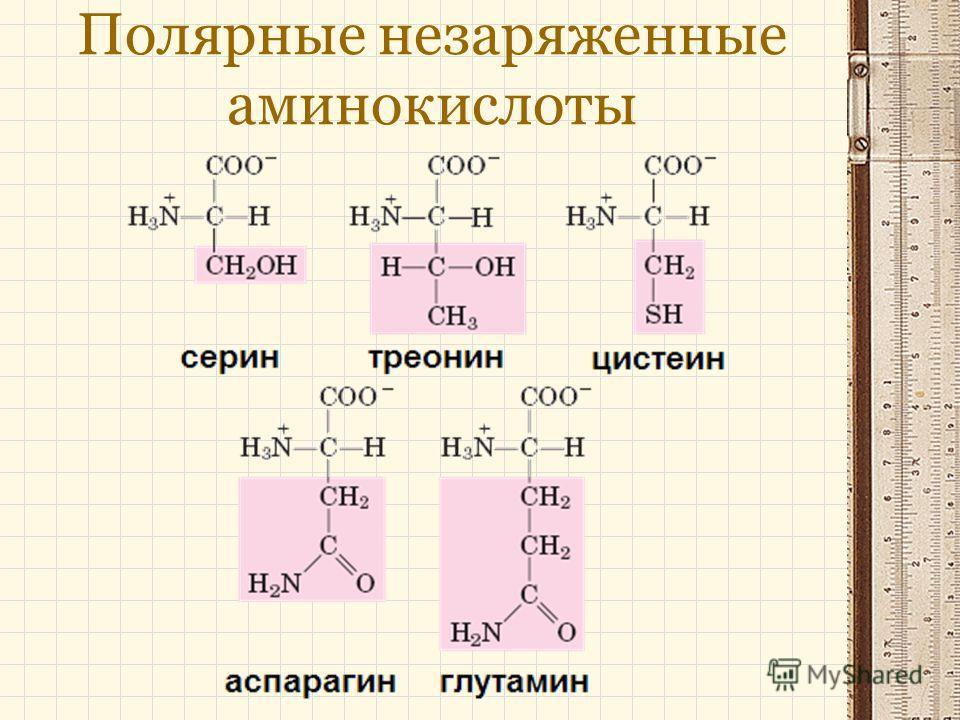 Полярные незаряженные аминокислоты