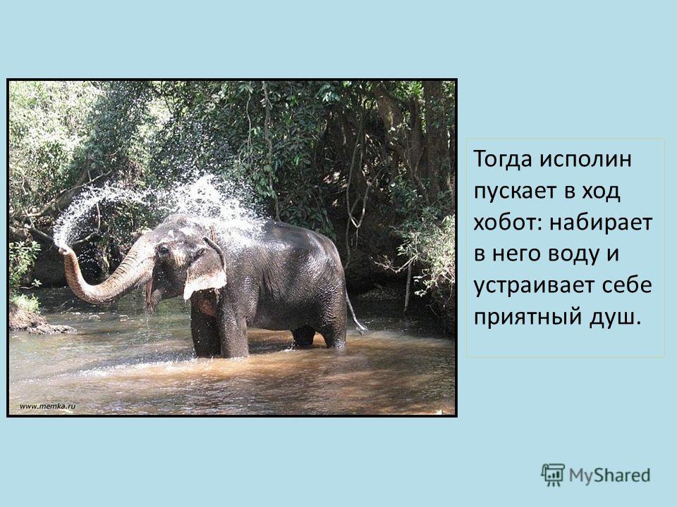 Тогда исполин пускает в ход хобот: набирает в него воду и устраивает себе приятный душ.