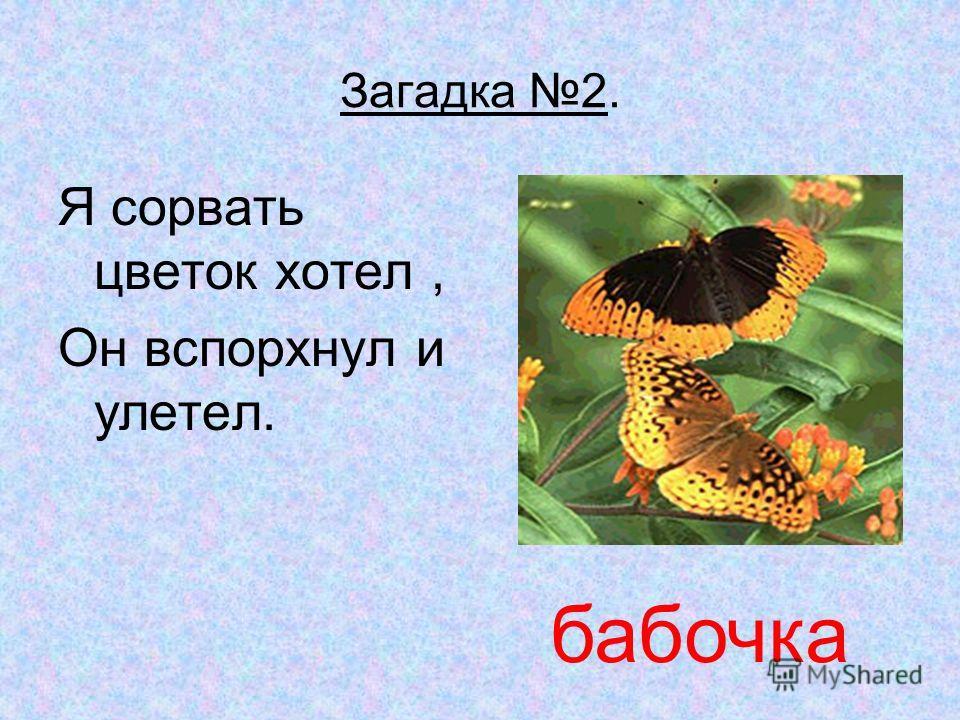 Презентация на тему Курсовая работа Сергиенко И А школа  5 Загадка 2 Я сорвать цветок хотел Он вспорхнул и улетел бабочка