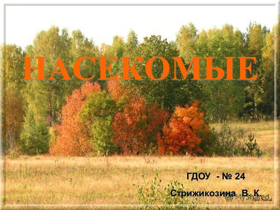 НАСЕКОМЫЕ ГДОУ - 24 Стрижикозина В. К.